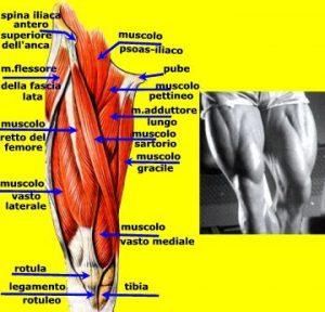 Conosciamo il dolore muscolare alla gamba